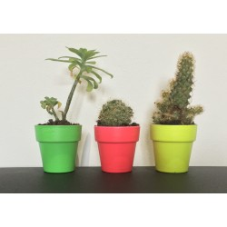 Plantes dans jolis pots Fluo DIY KEEN